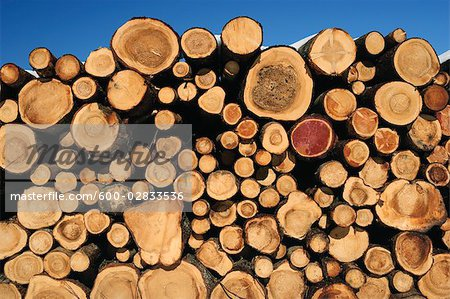 Stacked Logs Stock Photo - Premium Royalty-Free, Image code: 600-02833536