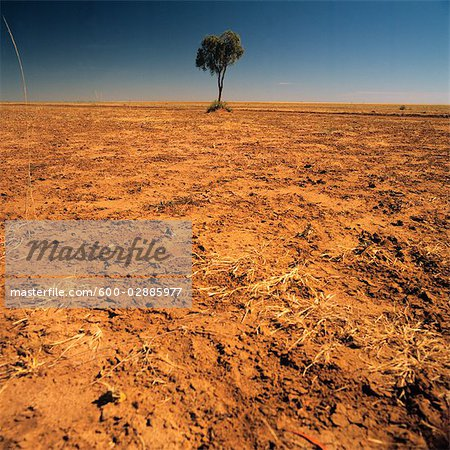 Lone Tree on a Barren Plain Stock Photo - Premium Royalty-Free, Image code: 600-02885977