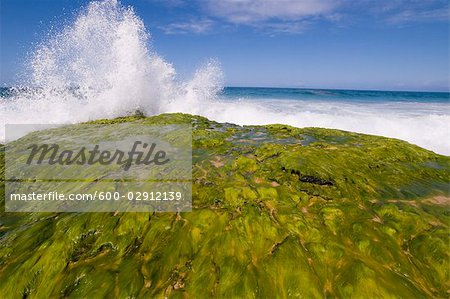 Surf Breaking, Kauai, Hawaii, USA Stock Photo - Premium Royalty-Free, Image code: 600-02912139