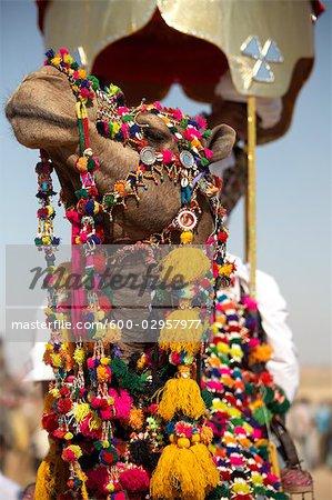 Camel Festival, Jaisalmer, Rajasthan, India