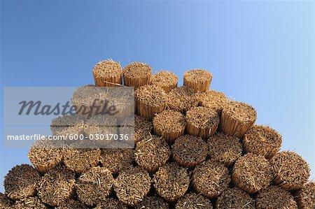 Drying Reed, Burgenland, Austria