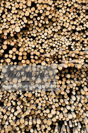 Stack of Pine Logs, Williams Lake, British Columbia, Canada Stock Photo - Premium Royalty-Free, Image code: 600-03075423