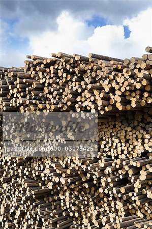 Stack of Pine Logs, Williams Lake, British Columbia, Canada Stock Photo - Premium Royalty-Free, Image code: 600-03075425