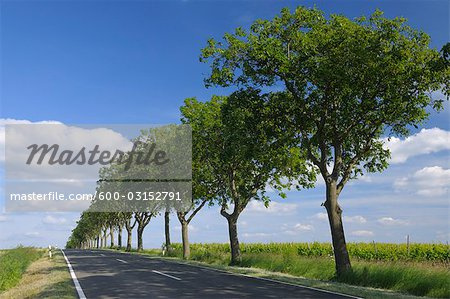 Country Road, Ober-Florsheim, Alzey-Worms, Rhineland-Palatinate, Germany Stock Photo - Premium Royalty-Free, Image code: 600-03152791