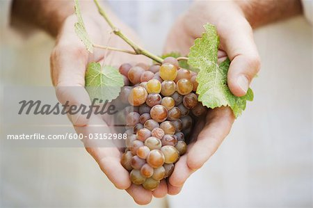 Close-up of Man Holding Grapes Stock Photo - Premium Royalty-Free, Image code: 600-03152988