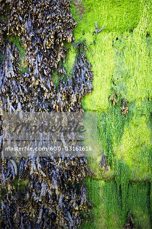 Seaweed Stock Photo - Premium Royalty-Free, Image code: 600-03161616