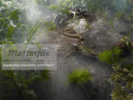 Burmese Python in the Jungle Stock Photo - Premium Royalty-Free, Image code: 600-03439617