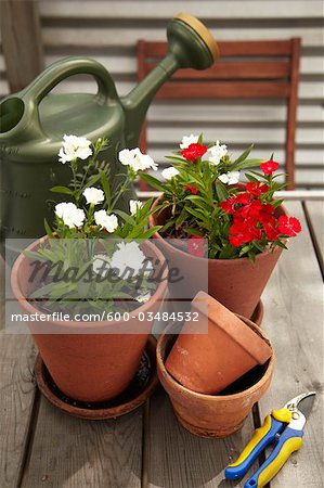 Potted Plants and Gardening Equipment on Roof Garden Table Stock Photo - Premium Royalty-Free, Image code: 600-03484532