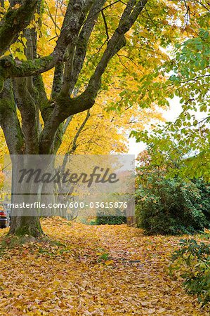 13th Avenue, West Point Grey, Vancouver, British Columbia, Canada Stock Photo - Premium Royalty-Free, Image code: 600-03615876