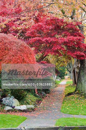 11th Avenue, West Point Grey, Vancouver, British Columbia, Canada Stock Photo - Premium Royalty-Free, Image code: 600-03615882