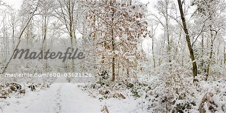 Fresh Snowfall, Pacific Spirit Regional Park, Point Grey, Vancouver, British Columbia Stock Photo - Premium Royalty-Free, Image code: 600-03621326