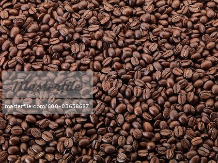 Mountain Gems Blend Coffee Beans Stock Photo - Premium Royalty-Free, Image code: 600-03638687