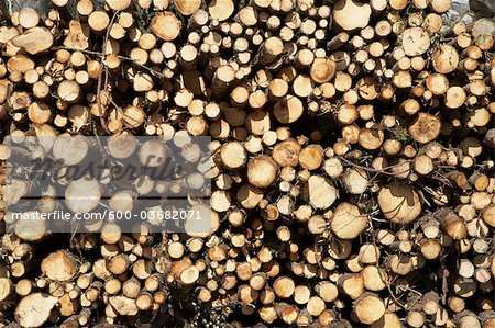 Woodpile, Krageroe, Telemark County, Eastern Norway, Norway Stock Photo - Premium Royalty-Free, Image code: 600-03682071