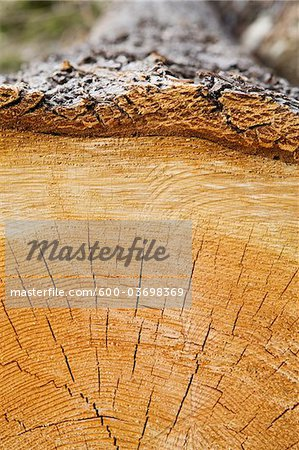 Cross-section of Log, British Columbia, Canada Stock Photo - Premium Royalty-Free, Image code: 600-03698369