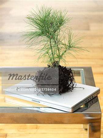 Sapling on Laptop Computer Stock Photo - Premium Royalty-Free, Image code: 600-03738404
