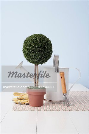 Potted Plant and Gardening Utensils Stock Photo - Premium Royalty-Free, Image code: 600-03738801