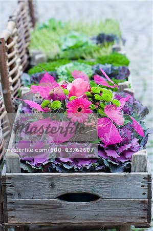 Planter, Salzburg, Austria Stock Photo - Premium Royalty-Free, Image code: 600-03762607