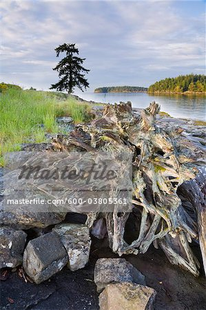 Gabriola Passage View From Drumbeg Provincial Park, Strait of Georgia, Gabriola Island, British Columbia, Canada Stock Photo - Premium Royalty-Free, Artist: J. A. Kraulis, Code: 600-03805361