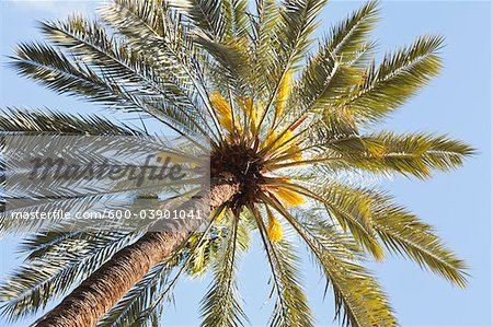 Palm Tree, Jardin Majorelle, Marrakech, Marrakech-Tensift-El Haouz Region, Morocco Stock Photo - Premium Royalty-Free, Image code: 600-03901041