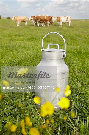 Milk Can and Cows in Field, Havneby, Syddanmark, Denmark Stock Photo - Premium Royalty-Free, Image code: 600-03907441