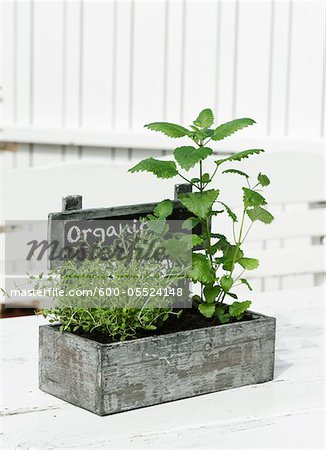 Organic Herbs in Flowerpot Stock Photo - Premium Royalty-Free, Image code: 600-05524148
