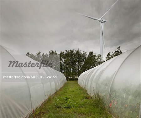 Computer Composite of Wind Turbine and Greenhouses, Iceland Stock Photo - Premium Royalty-Free, Image code: 600-05524159