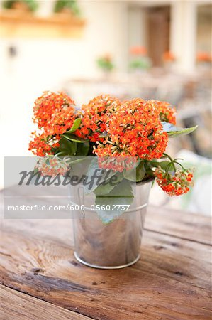 Kalanchoe on Table, Ontario, Canada
