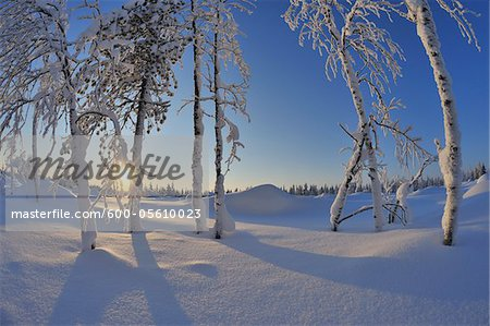 Snow Covered Trees with Sun, Rukajarvi, Northern Ostrobothnia, Finland Stock Photo - Premium Royalty-Free, Image code: 600-05610023