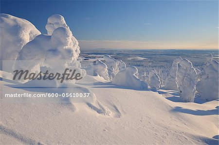 Snow Covered Trees, Rukatunturi, Kuusamo, Northern Ostrobothnia, Finland