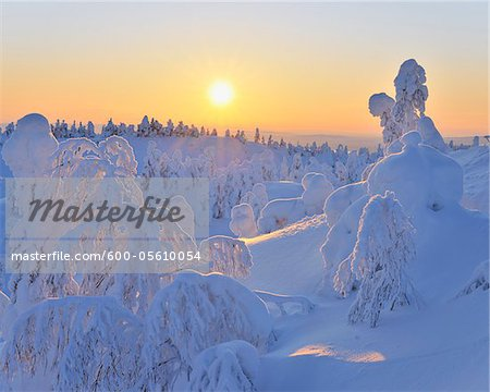 Snow Covered Trees at Sunset, Rukatunturi, Kuusamo, Northern Ostrobothnia, Finland Stock Photo - Premium Royalty-Free, Image code: 600-05610054