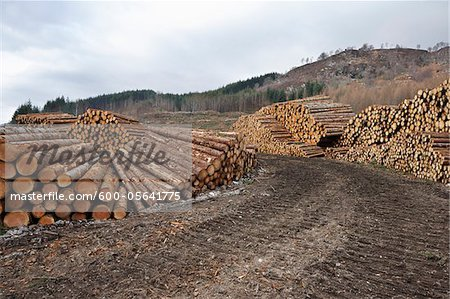 Piles of Logs, Scotland Stock Photo - Premium Royalty-Free, Image code: 600-05641775