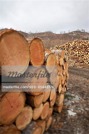 Piles of Logs, Scotland Stock Photo - Premium Royalty-Free, Image code: 600-05641776