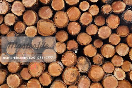 Pile of Logs, Scotland Stock Photo - Premium Royalty-Free, Image code: 600-05641777