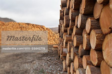 Piles of Logs, Scotland Stock Photo - Premium Royalty-Free, Image code: 600-05641778