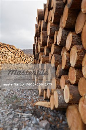 Piles of Logs, Scotland Stock Photo - Premium Royalty-Free, Image code: 600-05641779