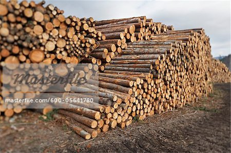 Piles of Logs, Scotland Stock Photo - Premium Royalty-Free, Image code: 600-05641780