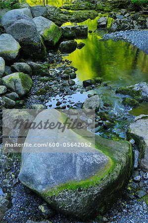 Stream, Harz National Park, Okertal, Oker, Lower Saxony, Germany