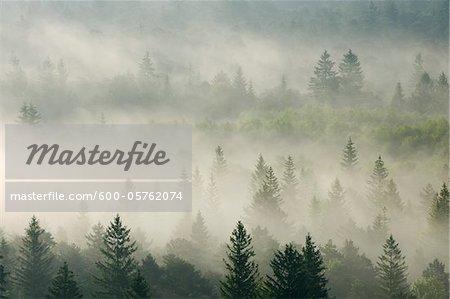 Morning Mist in Forest, Isar Valley, Wolfratshausen, Upper Bavaria, Bavaria, Germany