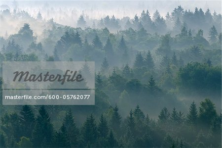 Morning Mist in Forest, Isar Valley, Wolfratshausen, Upper Bavaria, Bavaria, Germany Stock Photo - Premium Royalty-Free, Image code: 600-05762077