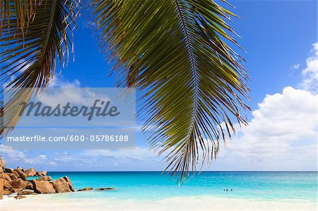 Coconut Palm Tree Fronds and Indian Ocean at Anse Georgette, Praslin Island, Seychelles Stock Photo - Premium Royalty-Free, Image code: 600-05786188