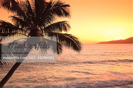 Coconut Palm Tree at Sunrise, Anse Patates, La Digue, Seychelles Stock Photo - Premium Royalty-Free, Image code: 600-05786201