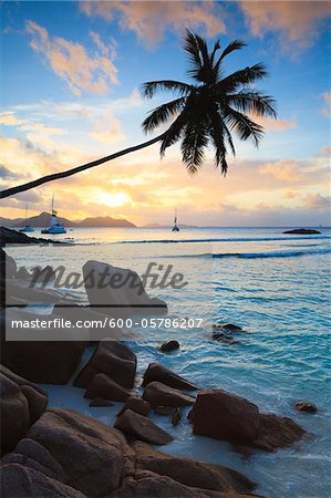 Coconut Palm Tree at Sunset, Anse Severe, La Digue, Seychelles Stock Photo - Premium Royalty-Free, Image code: 600-05786207