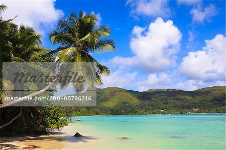 Shoreline at Anse a la Mouche, Mahe, Seychelles Stock Photo - Premium Royalty-Free, Image code: 600-05786216
