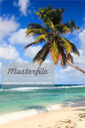 Coconut Palm at Anse Parnel, Mahe, Seychelles Stock Photo - Premium Royalty-Free, Image code: 600-05786219