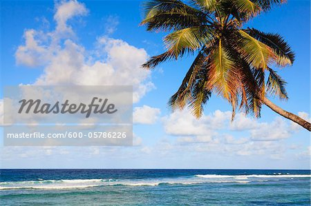 Coconut Palm Tree on Beach, Baie Lazare, Mahe, Seychelles Stock Photo - Premium Royalty-Free, Image code: 600-05786226