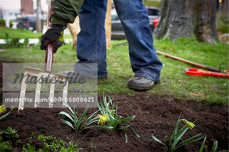 Gardener tilling Garden Soil with Pitchfork, Toronto, Ontario, Canada Stock Photo - Premium Royalty-Free, Image code: 600-05800621