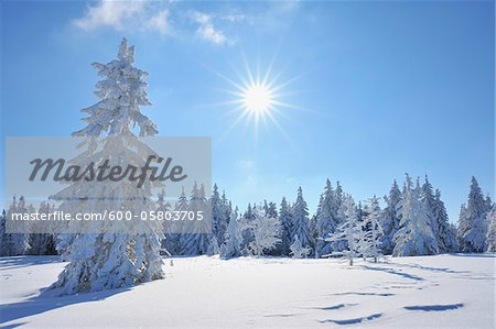 Snow Covered Conifer Trees with Sun, Grosser Beerberg, Suhl, Thuringia, Germany Stock Photo - Premium Royalty-Free, Image code: 600-05803705