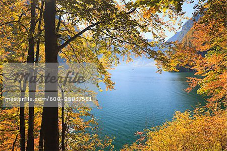 Lake Koenigssee and Beech Foliage in Autumn, Berchtesgadener Land, Bavaria, Germany Stock Photo - Premium Royalty-Free, Image code: 600-05837561