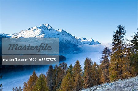 Larch Trees and Piz de la Margna by Lake Sils with Fog, Engadin, Switzerland Stock Photo - Premium Royalty-Free, Image code: 600-05837575
