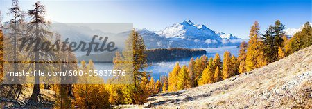 Larch Trees by Lake Sils and Piz de la Margna, Engadin, Switzerland Stock Photo - Premium Royalty-Free, Image code: 600-05837576
